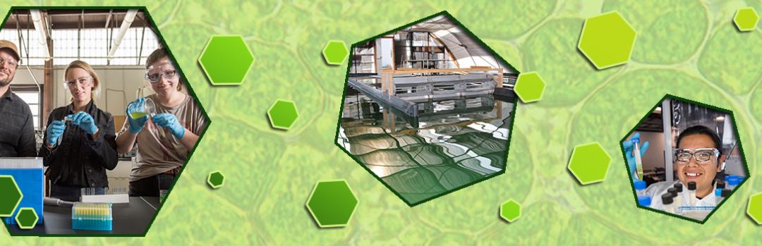 Online Algae Cultivation Classes begin March 22